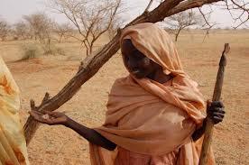 Gomma arabica uno strategico prodotto tutto naturale