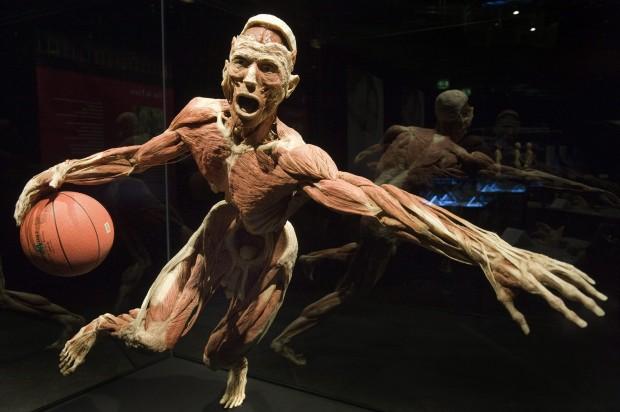 body worlds la mostra sul corpo umano