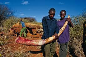 tanzania elefanti