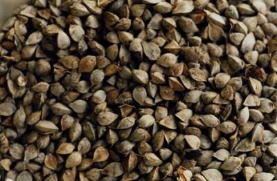 grano saraceno 1