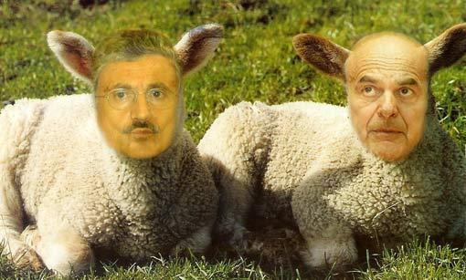 pecore_pd