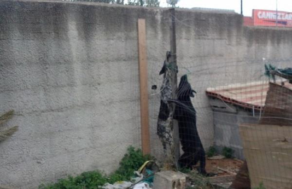 atto indimidatorio telejato pino maniaci ritrova impiccati i suoi cani