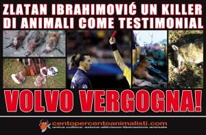 La Volvo aveva ingaggiato Ibrahimovic per una campagna pubblicitaria. Ecco la reazione degli animalisti.
