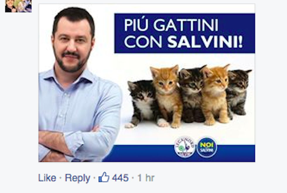 gattini_salvini