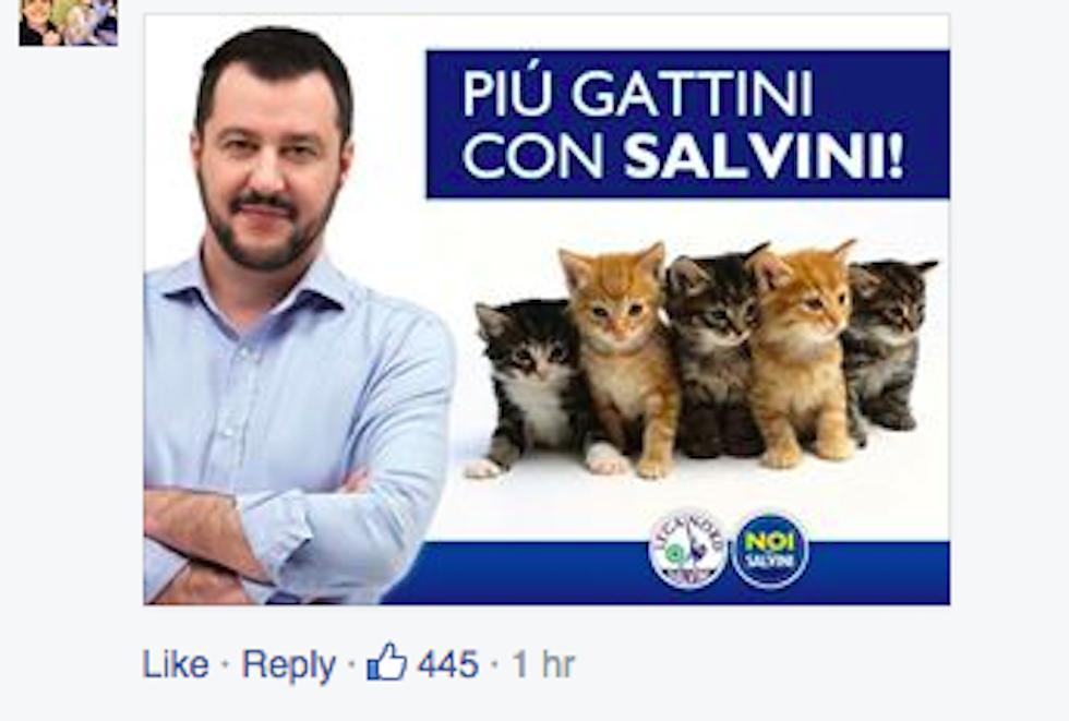 gattini_salvini
