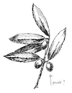 ulivo, simbolo ulivo, prodi ulivo