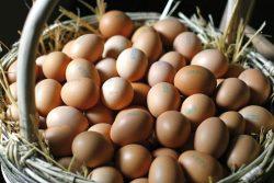 Uova contaminate Fipronil: in Italia due casi, conferma del Ministero