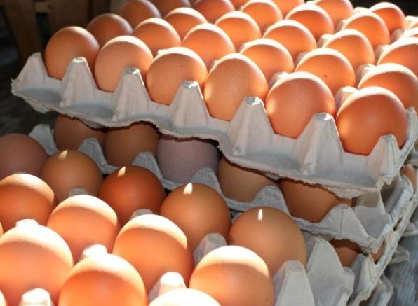 Allarme salmonella nelle uova fresche, il ministero della Salute blocca la vendita