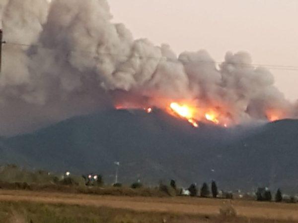 incendio del monte serra, parla l'assessore