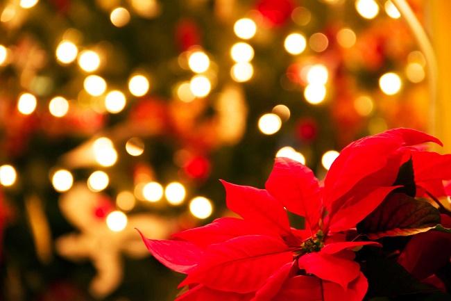Sms Per Auguri Di Natale.Auguri Buona Vigilia Di Natale 2018 Frasi Biglietti E Immagini Da