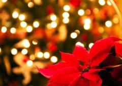 Cosa si mangia a Natale 2018 in Italia: piatti e tradizioni regionali