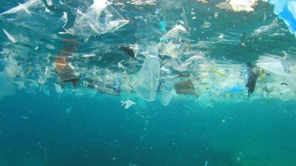 Piatti plastica e bicchieri: divieto d'uso dal 2021, la normativa Ue