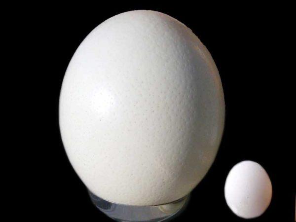 Quanto pesa un uovo sodo, di struzzo di quaglia o sgusciato