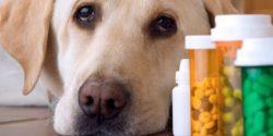Ricetta veterinaria elettronica: requisiti, chi deve farla e