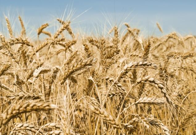 Aumento pasta e pane a settembre 2018 costo al kg, tutti i rincari