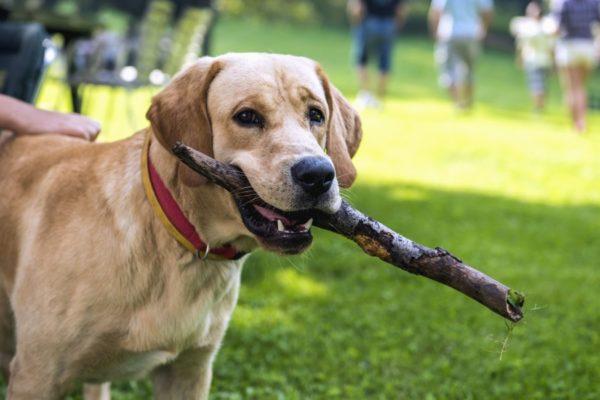 microchip cani obbligatorio costi e sanzioni