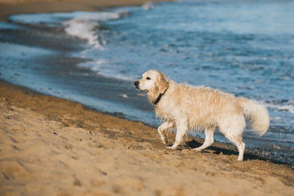 Cane in spiaggia multa, sanzioni e come è possibile portarlo. La legge