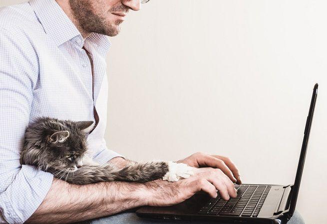Decreto ricetta elettronica veterinaria obbligatoria, articoli e cosa dice