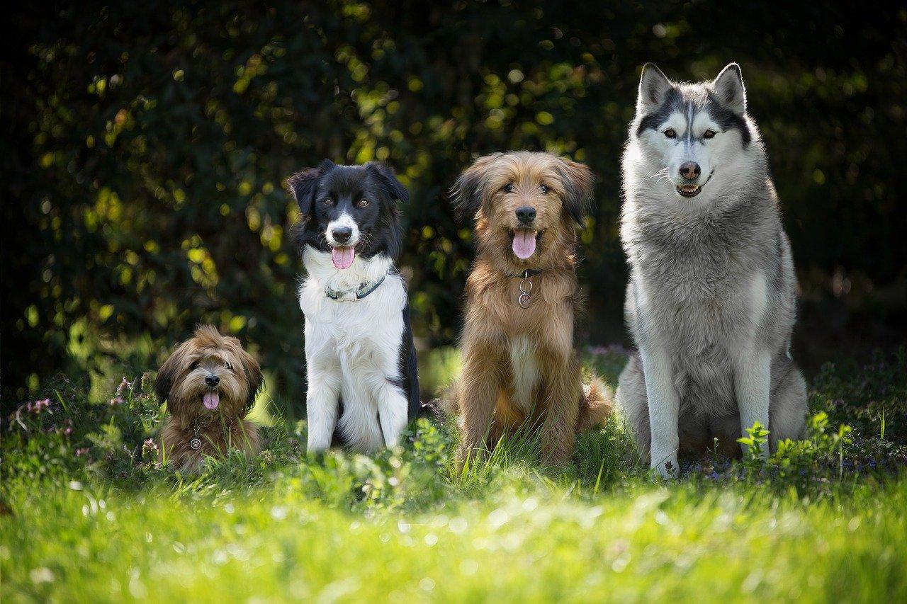 Collare elettrico cani vietato