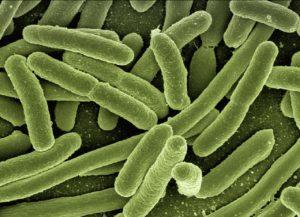 Yaravirus Brasile    sintomi    contagio e cosa accade ai contagiati