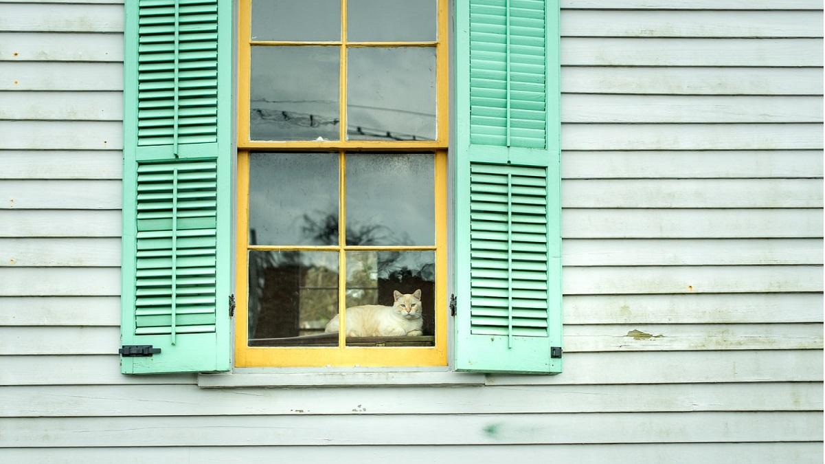 pets - gatto alla finestra