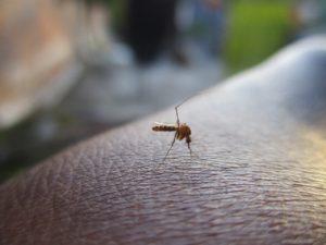 Zanzare coronavirus: rischio aumento contagi col caldo? Le a